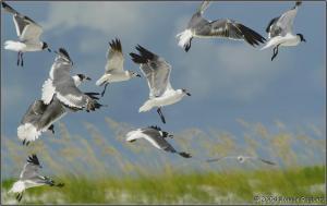 burung2-terbang